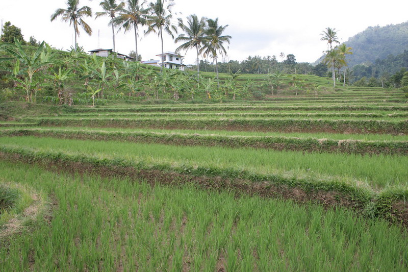 Reisebericht_Bali_16.JPG